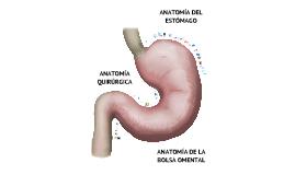 Copy of Anatomía del Estómago y Bolsa Omental