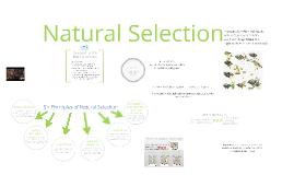 BI 1: Natural Selection