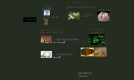 Bio lab presentation