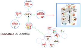 Copy of FISIOLOGIA DE LA ORINA