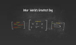 Inka- World's Greatest Dog