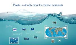 Plastic: a deadly meal for marine mammals