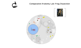 Comparative Anatomy Lab: Frog Dissection by Nicole Gargarella on Prezi