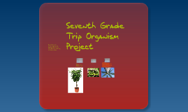 Seventh Grade Trip