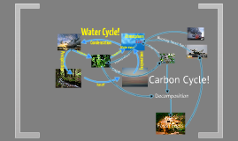 Water and Carbon Cycles 6th hour