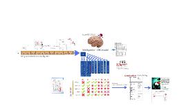 Intelligentie - CHC model
