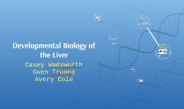 Copy of Developmental Biology of the Liver