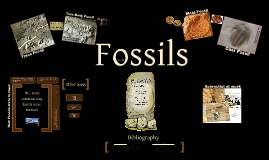 Copy of Fossils