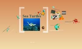 Sea Turtles Marine Bio 2011