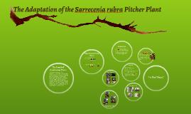 Sarrecenia rubra