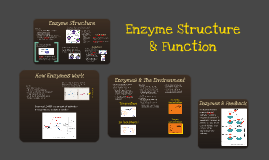 Copy of BI 2: Enzyme Structure & Function