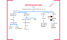 Copy of tipos de reproduccion celular