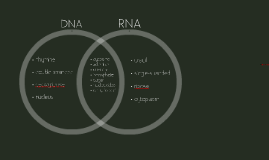 Copy of DNA replication, transcription, and translation for dummies