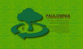 Copy of Paulownia Clone in Vitro 112®