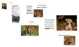 Jaguar: Endangered Species