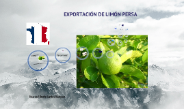 Copy of EXPORTACIÓN DE LIMÓN PERSA