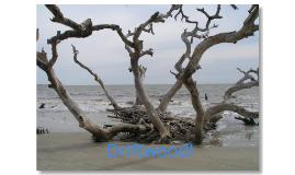 Driftwood!