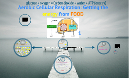 Cellular respiration: getting the energy from food