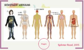 Menselijk lichaam: spreekbeurt Splinter Rood, februari 2015