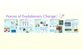 Chapter 23: Evolution: Evolutionary Forces