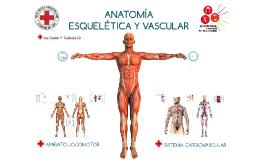 PAI: Anatomía Esqulético-vascular