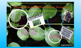 Buckthorn: Bothersome Invasive