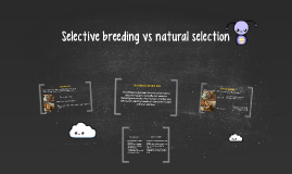 Selective breeding vs natural selection