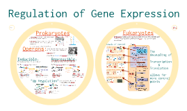 Chapter 15: Regulation of Gene Expression