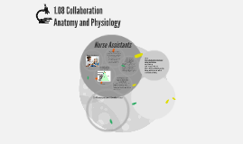 1.08 Collaboration Anatomy and Physiology