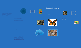 Copy of Copy of The Monarch Butterfly