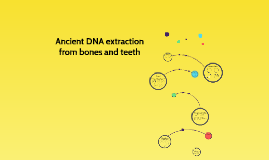 Ancient DNA Extraction
