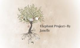 Elephants~by Janelle