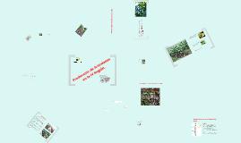 Arándano en la IV región chile