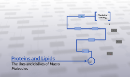 Lipids and Carbs