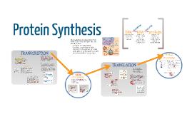 BI 3: Protein Synthesis