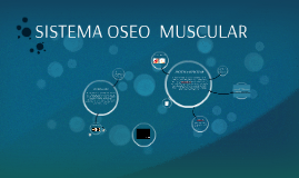 Copy of SISTEMA OSEO MUSCULAR