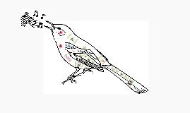 Copy of Mocking Bird