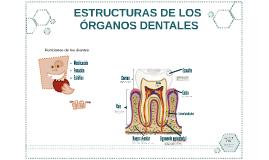 Estructuras de los órganos dentales