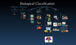 Classification & Dissection