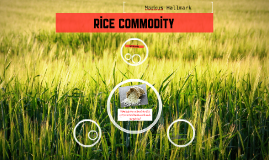 Rice Commodity