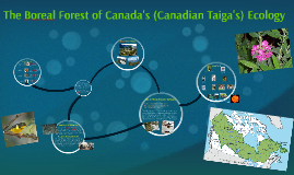 The Boreal Forest's Ecology
