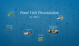 Pond Visit Pictures
