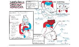Copy of Insuficiência Cardíaca Congestiva