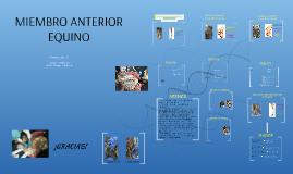 Copy of DISECCIÓN MIEMBRO ANTERIOR EQUINO