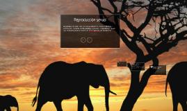 Copy of Reproduccion sexual en animales