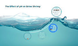The Effect of pH on Brine Shrimp