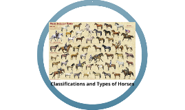 Classification and Types of Horses