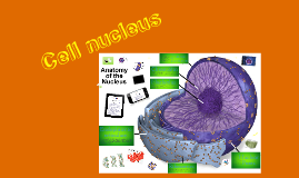 Cell nucleus.
