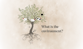 What is the environment?