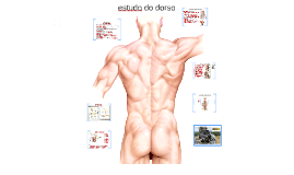 Copy of estudo do dorso